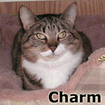 Charm  was adopted from the Cat House and Adoption Center on Saturday September 29th 2012.<br /> <br /> Charm<br /> <br /> Certainly charming.<br /> <br /> Charm has been there, done that and is ready to settle down and enjoy life without wondering where her next home will be found or what she will eat. Cuteness happens and she is happening.