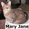Mary Jane was adopted from the Cat House and Adoption Center on Saturday, September 9, 2012.<br /> <br /> Mary Jane<br /> <br /> Cover Girl.<br /> <br /> Bold and beautiful with an innocence and gentleness to her soul. Mary Jane will be turning heads everywhere she goes and she is not aware of it.