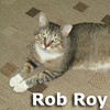Rob Roy was adopted from the Cat House and Adoption Center on Saturday, November 3, 2012.<br /> <br /> Rob-Roy<br /> <br /> More than a spirit.<br /> <br /> Dumped in a cardboard box on a doorstep while the homeowner was away, Rob Roy is appreciative, grateful and NOT feral as his clipped ear might suggest. Rob will lay and kneed his toes with just a kind look or gentle hand. He is thankful and we are thankful to have him with us. Are you ready to be thankful?