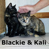 Blackie and Kali from their foster home at Steamboat Animal Hospital on Wednesday, September 12, 2012.