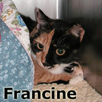 Francine was adopted from the Cat House and Adoption Center on Wednesday, September 26, 2012.<br /> <br /> Francine<br /> <br /> They broke the mold and the original is priceless.<br /> <br /> This adorable girl is so grateful to be safe and she reminds us regularly. Francine is so expressive both verbally and in her need to be touched that you cannot help but be stopped by her charm.