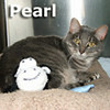Pearl was adopted from the Cat House and Adoption Center on Monday, October 15, 2012.<br /> <br /> Pearl<br /> <br /> Pearl hunting?<br /> <br /> This special Pearl is the object of beauty and a true gem. This beautiful refined lady is looking for a stable home where she can shine. Pearl is ready to put the past behind and move forward, forming a forever bond.