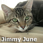 Jimmy June was adopted from the Cat House and Adoption Center on Saturday, September 9, 2012.<br /> <br /> Jimmy<br /> <br /> Jimmy June-bug.<br /> <br /> A young lad that needs to find his way into your heart and home. He is confused as to why he was uprooted from what he thought was home to live without the friends and family he selected by himself. Very handsome.