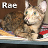 Rae was adopted from the Cat House and Adoption Center on Saturday, September 9, 2012