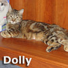 Dolly and Poly Pocket were adopted together from the Cat House and Adoption Center on Saturday, October 6, 2012.<br /> <br /> Dolly<br /> <br /> Dearest Dolly<br /> <br /> With her little 'uns all grown, Dolly is now on the search for a homestead to call her own. She loves lap time and does not mind sharing her toys with feline companions.