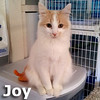 Joy was adopted from the Cat House and Adoption Center on Saturday, October 13, 2012.<br /> <br /> Joy<br /> <br /> Betty Crocker at work with a little Joy.<br /> <br /> Born and bred in a bedroom with many cats, this little lady (along with Jif) doesn't know it but we are cooking up an idea of finding her a forever home where she will be part of family and loved forever.