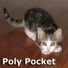 Dolly and Poly Pocket were adopted together from the Cat House and Adoption Center on Saturday, October 6, 2012.<br /> <br /> Polly Pocket<br /> <br /> This little pocket sized gal is confident, friendly and loves having fun. As pretty as her namesake, but oh so much more fun. Take her home today to add adventure to your life.