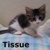 Tissue was adopted from her foster home at Steamboat Animal Hospital on Wednesday, September 12, 2012