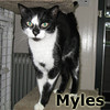 Myles was adopted from the Cat House and Adoption Center on Saturday, December 29, 2012.<br /> <br /> Myles<br /> <br /> Explorer in his former life.<br /> <br /> Myles is through roaming to find out what life has to offer, he feels that indoor living is pretty good and feels there is something to be said for a full dish of food. He was found skinny, hungry and ready for a catnap.