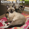 Simon and Sara were adopted together from the Cat House and Adoption Center on Saturday, October 13, 2012