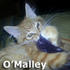O'Malley was adopted from his foster home at South Bay Veterinary Hospital on Thursday, October 25, 2012.