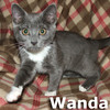 Wanda was adopted from her foster home at Steamboat Animal Hospital on Thursday, October 25, 2012.