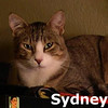 Sydney was adopted from the Cat House and Adoption Center on Saturday September 29th 2012.