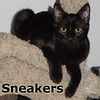 Sneaker was adopted from his foster home on Wednesday, October 10, 2012.<br /> <br /> Sneakers<br /> <br /> Wanna put a little bounce in your step?<br /> <br /> Sneakers is a very energetic little boy and would be a fun addition to any home. He goes well with just about anything (or any one) and is great for high energy play as well as lazy couch time.