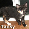 Tansy and Toni (sisters) were adopted together from their foster home at Steamboat Animal Hospital on Friday, October 5, 2012.