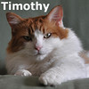 Timothy was adopted from his foster homes on Saturday, October 20, 2012.<br /> <br /> Timothy<br /> <br /> Looking for a home with an open floor plan.<br /> <br /> Sweet as he is handsome, Timothy is looking for a home with no closed doors. This gentle guy wants to be able to see and go wherever he wants, when he wants. He needs an indoor only home.