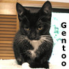 Gentoo was adopted from Hawks Prairie Animal Hospital in August, 2010.