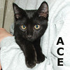Ace and Topper were adopted from the Cat House and Adoption Center on Saturday, September 11, 2010.