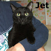 Jet was adopted from the Cat House and Adoption Center on Sunday, August 8, 2010.<br /> <br /> Jet<br /> <br /> Ready for take-off and a home. This active boy has many talents that range from flying like an eagle to being as graceful as a gymnast. Jet also enjoys special time with humans soaking up all the love and affection you can give him.