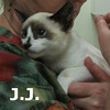 JJ was adopted from Hawks Prairie Veterinary Hospital on Friday September 24, 2010.