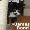 Ronnie and James Bond were adopted from the Cat House and Adoption Center on Saturday, September 11, 2010.<br /> <br /> James Bond<br /> <br /> Face to faces, secret places, feel the chill … A View To Killl (Bond Theme Song)<br /> <br /> James is no longer on the run. While he was able to find places to hide to stay alive, this handsome fella has decided to hang up the drama for a quieter life. Being off the streets beats life on the run.