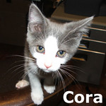 Cora was adopted from the Cat House and Adoption Center on Saturday September 4, 2010.<br /> <br /> Cora<br /> <br /> Simply delightful, Cora will be your biggest admirer and life long fan. She will want to follow you around and help around the house how ever she can.