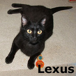 Lexus and Prius (Mother and Daughter) were adopted from the Cat House and Adoption Center on Saturday, August 14, 2010.<br /> <br /> Lexus<br /> <br /> Get your motor running… Sleek and shiny, Lexus is the luxury model of felines, and there are no recalls on this particular model.  She is a purring machine and will idle contently on your lap for hours.