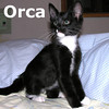 Orca was adopted from Hawks Prairie Veterinary Hospital on Tuesday, September 8, 2010.<br /> <br /> Orca<br /> <br /> Being the highly social and intelligent creature that he is, Orca is an active toy hound and snuggler looking for a tail-slapping good time.