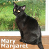 Mary Margaret Mittens and Beeg were adopted together from the Cat House and Adoption Center on Tuesday, August 31, 2010.