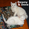Downy and Dove were adopted together from the Cat House on Saturday September 4, 2010.