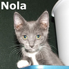 Nola was adopted from the Cat House and Adoption Center on Saturday, August 28, 2010.<br /> <br /> Nola<br /> <br /> Her beauty will catch your eye and her purrsonality will win your heart. A little bit nosy, Nola wants to be a part of everything you do.