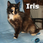 Iris, Hop-Sing and Ting-A-Ling were adopted from the Cat House and Adoption Center on Thursday, August 26, 2010.<br /> <br /> Iris<br /> <br /> One-eyed wonder. Rescued from a hoarder, this special young lady is ready to bloom. Iris begins to open up with just a glance in her direction, then she starts purring and she has captured your heart.