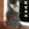Keen was adopted from the Cat House and Adoption Center on Saturday, August 28, 2010<br /> <br /> Keen<br /> Known for his comfort and innovation, Keen is a designer fellow. He is cuddly and smart and ready to step on in to your heart and home.