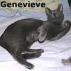 Genevieve was adopted from the Cat House and Adoption Center on Tuesday, August 31, 2010.