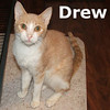 Drew was adopted and delivered to his new home on Monday, September 6, 2010.<br /> <br /> Drew<br /> <br /> The news reports are in, and Drew is the man! Still recovering from not enough to eat, he is gaining weight slowly and getting back his fabulous feline physique.