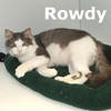 Rowdy was adopted from Hawks Prairie Veterinary Hospital on Saturday, August 14, 2010.