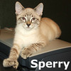 Sperry was adopted from Steamboat Animal Hospital on Friday, August 13, 2010.