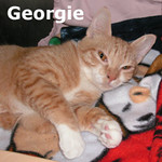 Mr. Peaches and Georgie were adopted from Steamboat Animal Hospital on Friday, August 20, 2010.