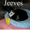 Jeeves and Lars were adopted from the Cat House and Adoption Center on Tuesday, August 17, 2010.