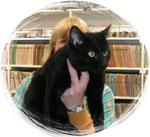 """Amos adopted . . .7-11-03<br /> Meet """"Amos"""" He is a former prize fighter and  looking for love.  <br /> He is very sweet natured and now has  a permanent home to call his own."""