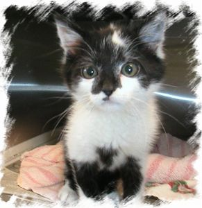 Wizard, came in to the program and was immediately  adopted 7-3-03