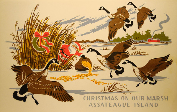 Hungerford Christmas Cards from Assateague