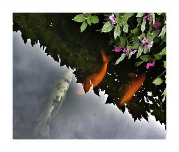 #5444 - Koi Pond