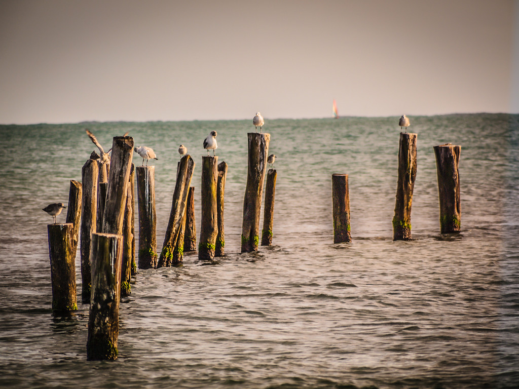I got lucky with the sailboat in the background whle these seagulls perched on their posts nearing sunset.  Taken in Playa del Carmen Mexico