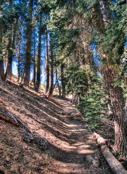 A skinny path up the hill on a hike in California
