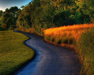Loved the curving path and the contrast of the yellow tops of the tall grass with the fairway to the left.