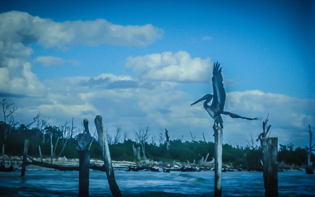 Took this with a waterproof camera in Playa Del Carmen.