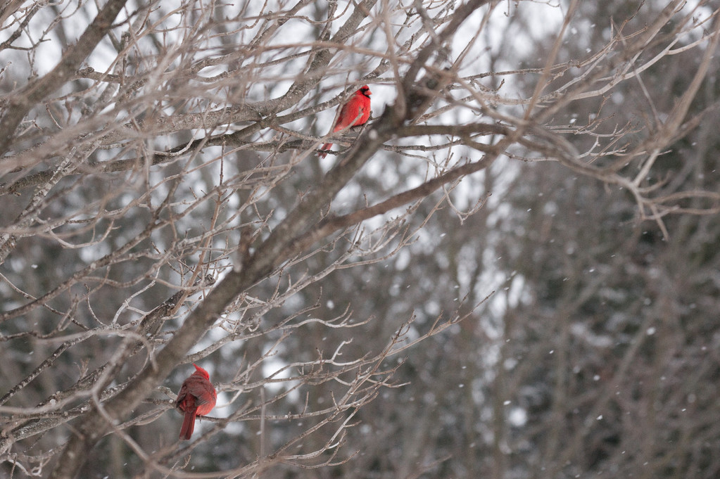 Birds sitting in the tree in the cold