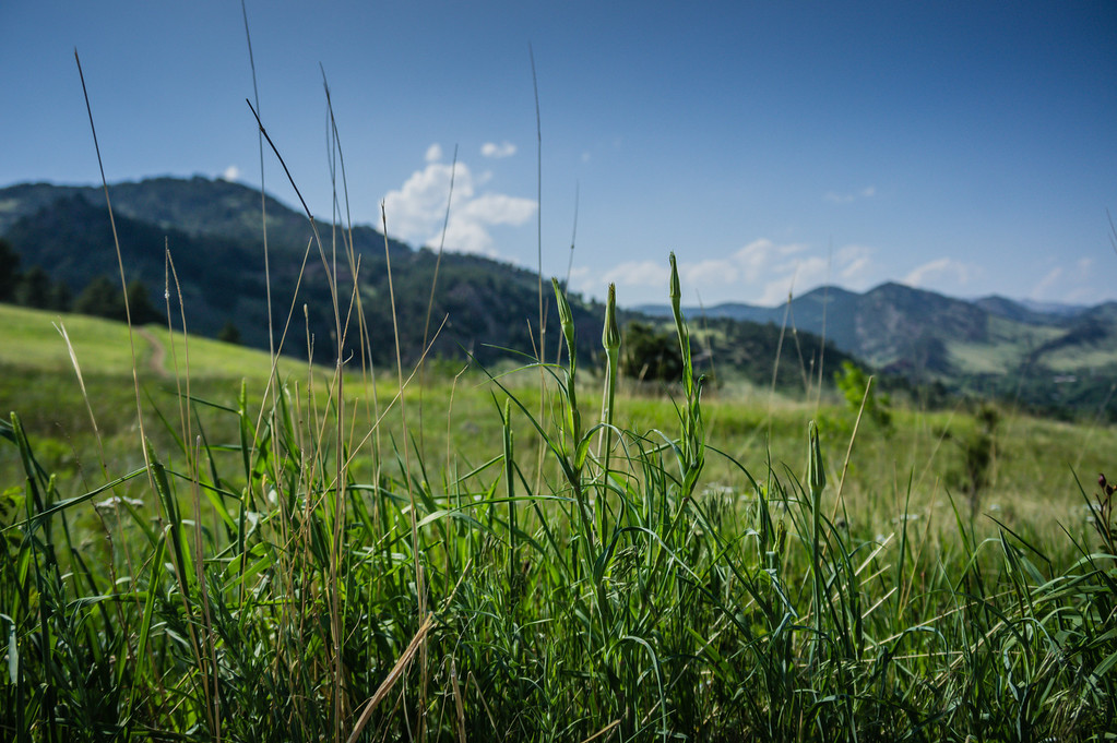 Kept the grass in focus here as the mountains made for a nice backdrop