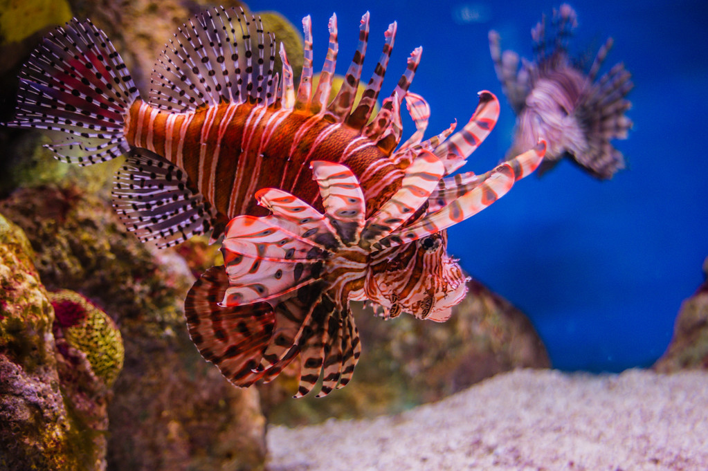 Just loved the bright colors available in this aquarium